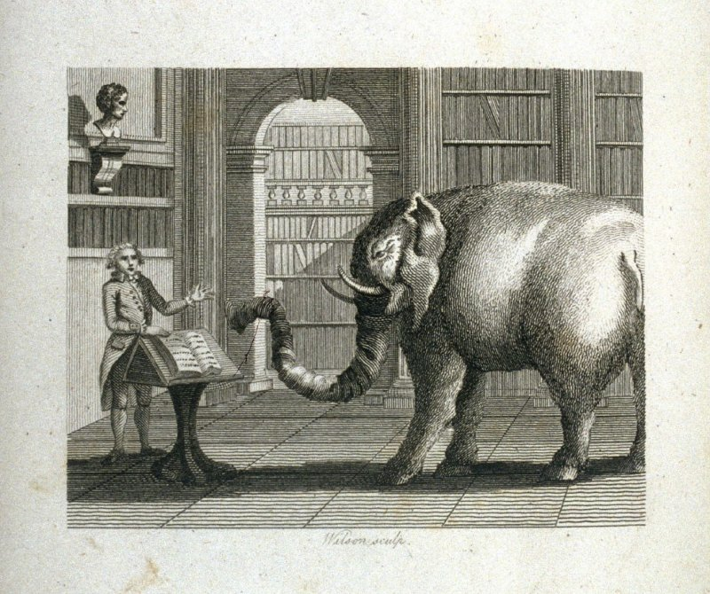 The Elephant and the Bookseller, opposite page 45 in the book, Fables by John Gay (London: John Stockdale, 1793), Vol. 1